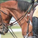 How To Use Draw Reins