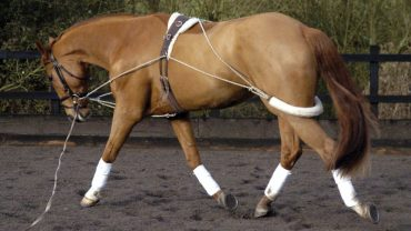 Pessoa Training System On A Horse