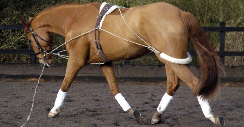 Pessoa Training System On A Horse