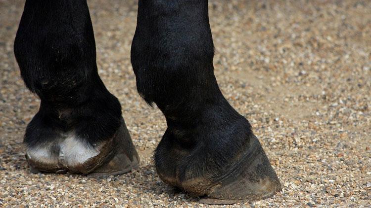 best hoof boots