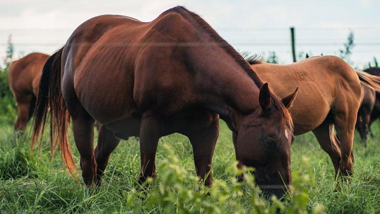 Best Horse Feed Balancers