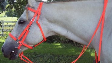 combination bridles