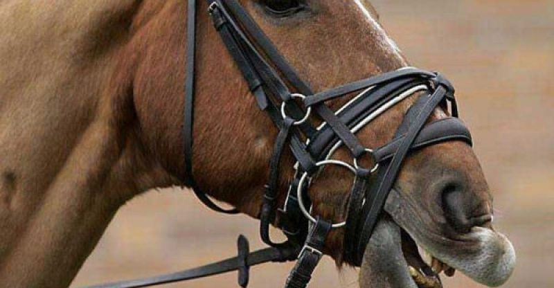 different types of nosebands