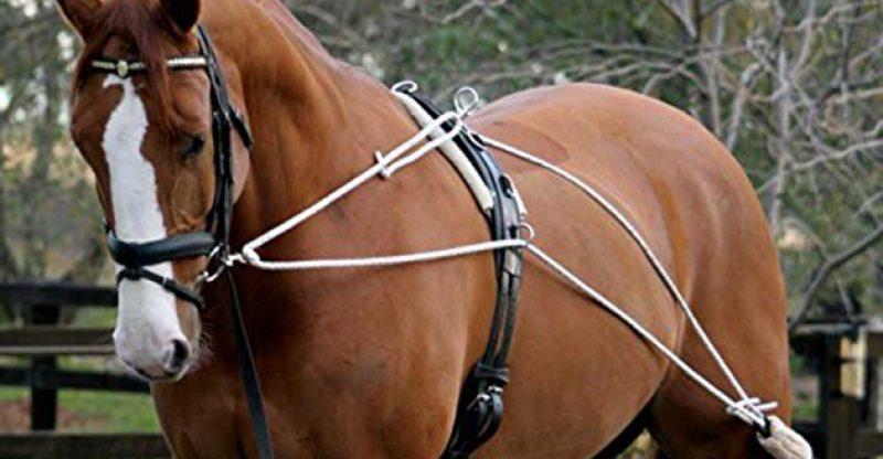 horse training aids